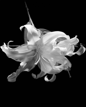 Black & White Underwater Flower Print