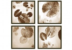 Water Lily - Sepia Print